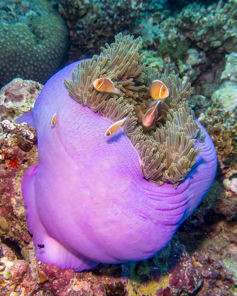 Fish Bouquet (Pink Anemonefish)