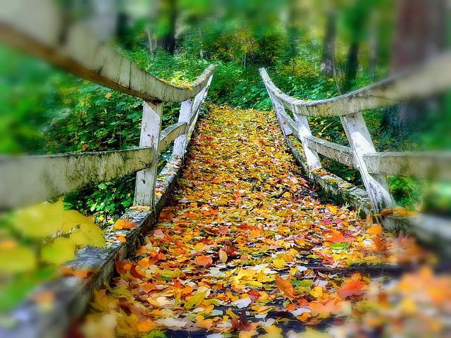 Rickety bridge with leaves EXPLORED! (29/11/2019) / Rozoga híd levelekkel