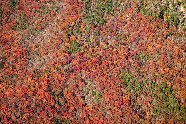 Autumn Flyover