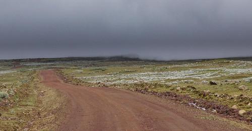 Kauri Pass-36.jpg