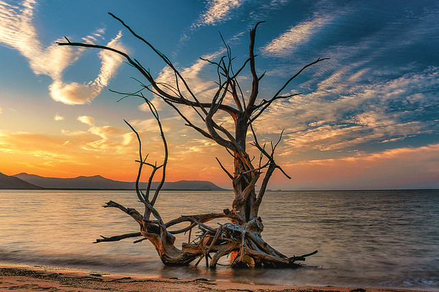 Rolling Bay driftwood at sunset
