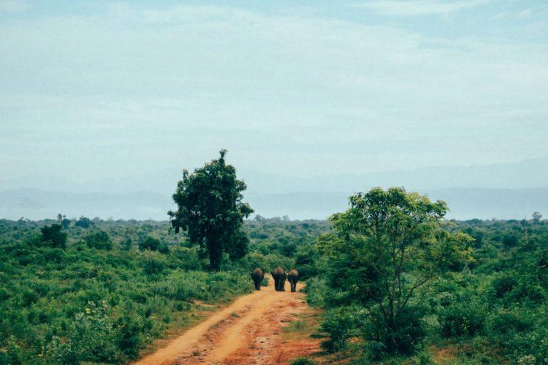 斯里蘭卡南部坦加拉鎮(Tangalle)附近的道路,是象群和人類共享的空間之一。圖片由Sofia C.C. Valladares提供(Pixabay平台)