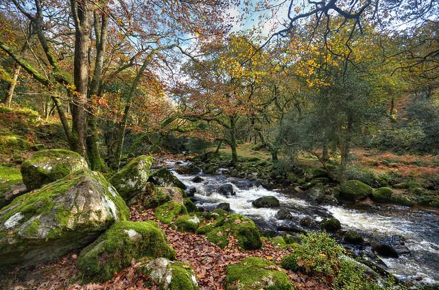 The River Plym at Dewerstone Wood, Dartmoor