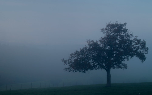 tree trees lonely wood westsussex mist misty fog foggy hill trundle light morning moody mood atmosphere atmospheric fence canon canoneos750d canon750d photography photograph landscape nationalpark south southdownsnationalpark southdowns autumn autumnal seasonal season seasons