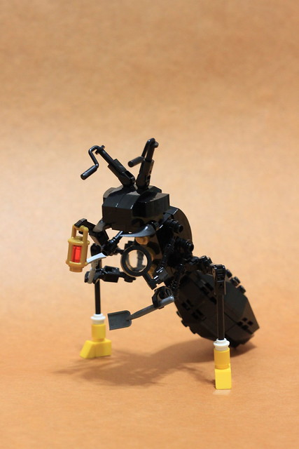 Take a glance at the fancy ant