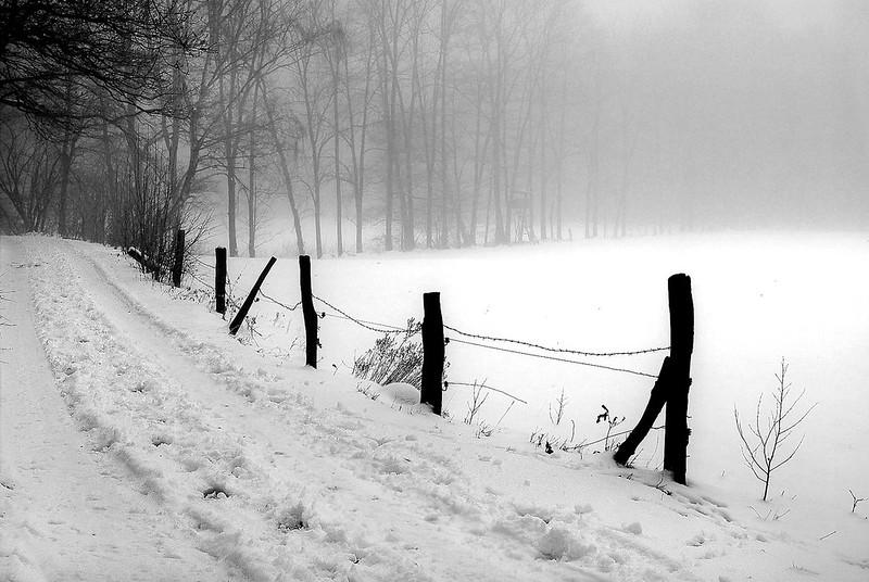 Winter am Busch