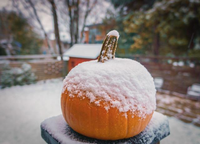 Pumpkin news !