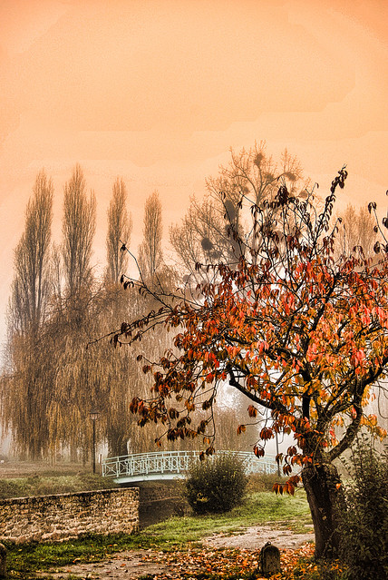 Automne magique. Autumn.