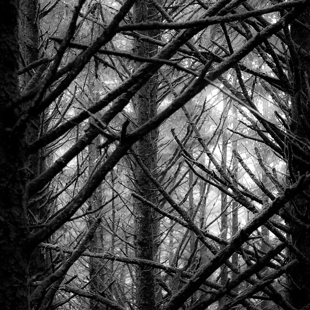 In The Pines 006