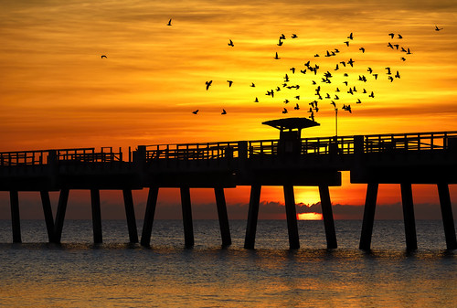 florida jacksonvillebeach sunrise fishingpier beach ocean sea birds