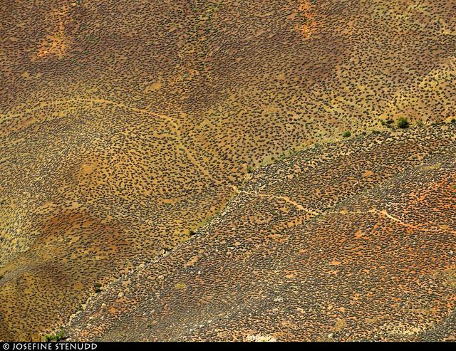 20160826_36 Trail through shrubs far below Rim Trail - Grand Canyon, Arizona