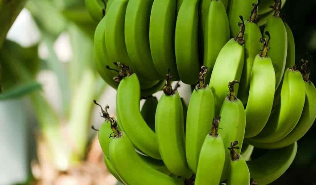 un-emballage-de-plastique-fait-de-restes-de bananiers