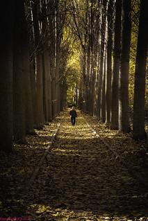 Walking through autumnal forest ...., Paseando por el otoñal Bosque.....