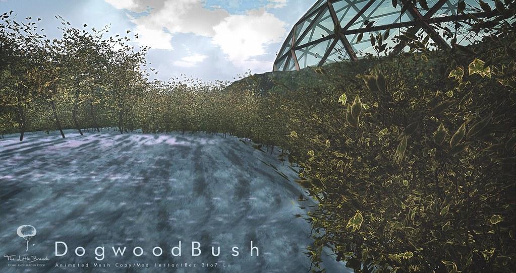 Little Branch Dogwood Bush