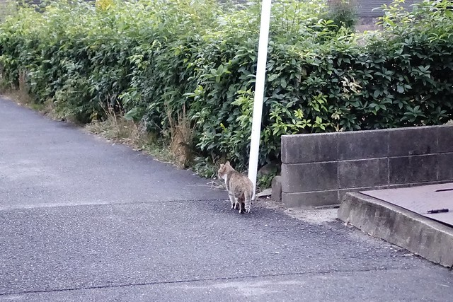 Today's Cat@2019-11-29