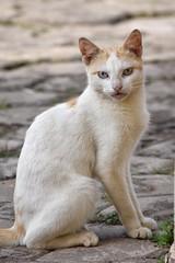 Stray cats of Ghana!