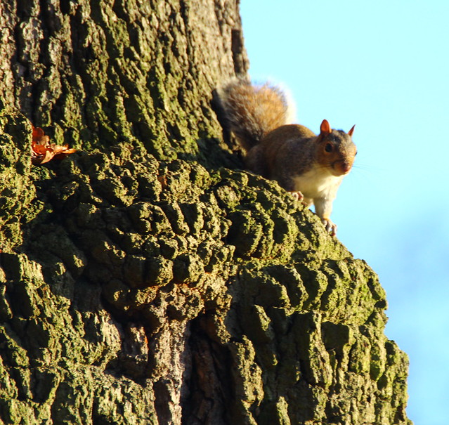 Squirrel enjoying the setting sun
