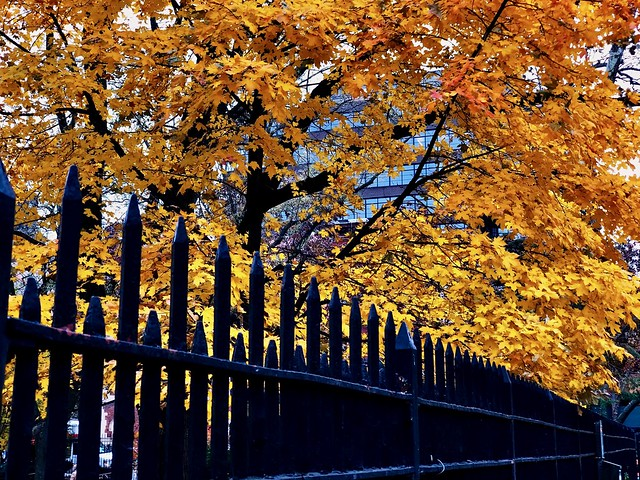 Autumn leaves - New York City
