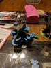 Playing Papillion