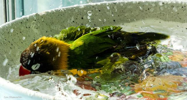 splishing and splashing