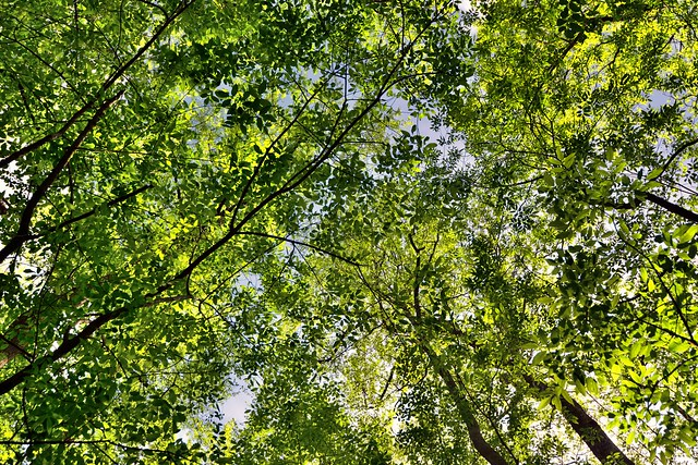 A Perspective of Trees in Congaree National Park