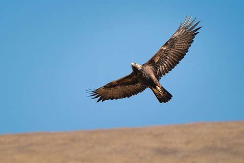 Fly Like an Eagle...