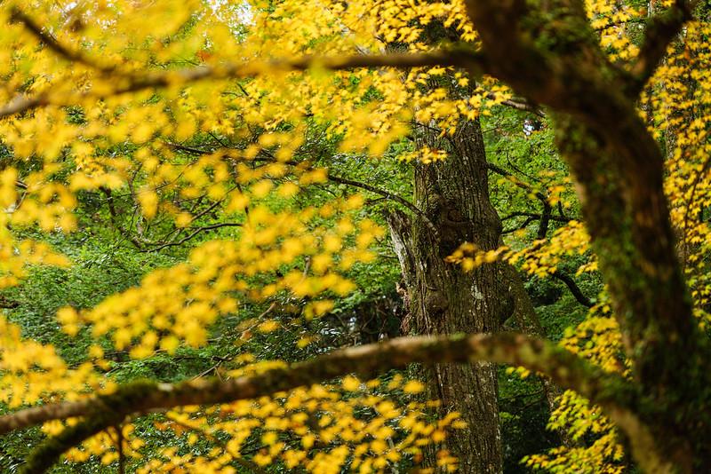 Autumn Color / Syouryakuji Temple