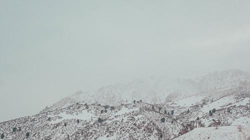 landscape winter nikond500 d500 wanderfar nikkor2470mm 2019 nature nikon outside travel forest hiking colorado tree fog snow tourism mountgalbraithpark golden