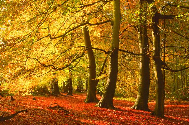 Happy trees, Sulham, Berkshire, England