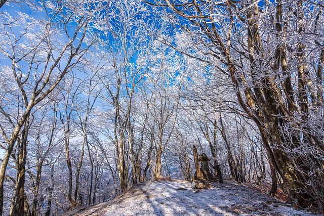 樹氷に囲まれた山頂