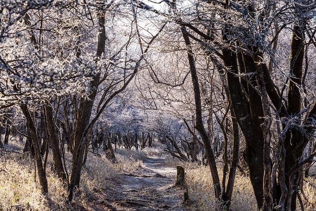 霧氷の登山道