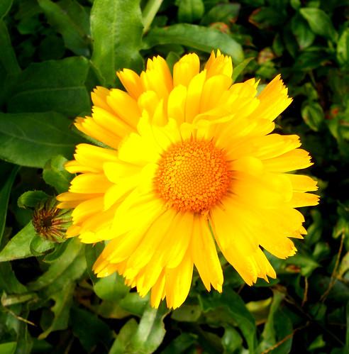 la dernière fleur de notre jardin