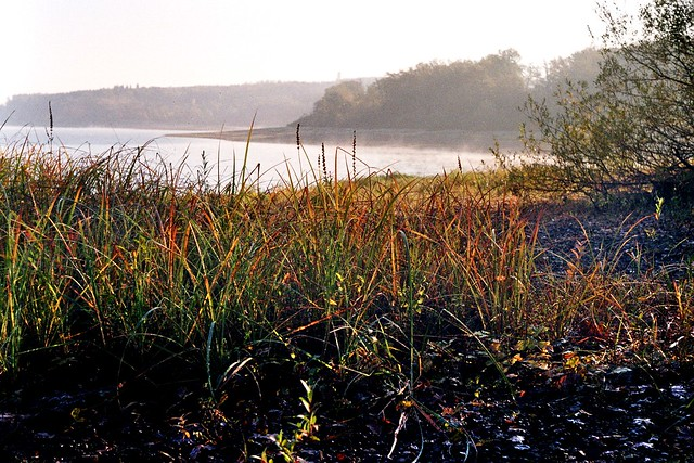 autumnal grass
