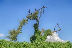 Vegetation Lake Victoria