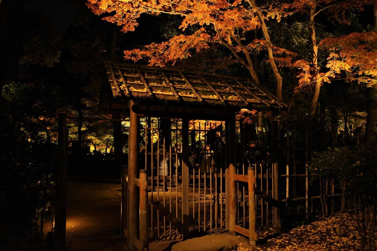 大田黒公園 庭園入口の紅葉とライトアップ
