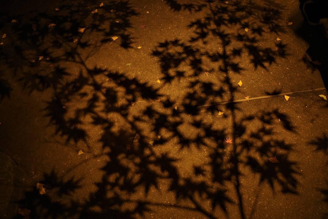 ライトアップされる紅葉の影