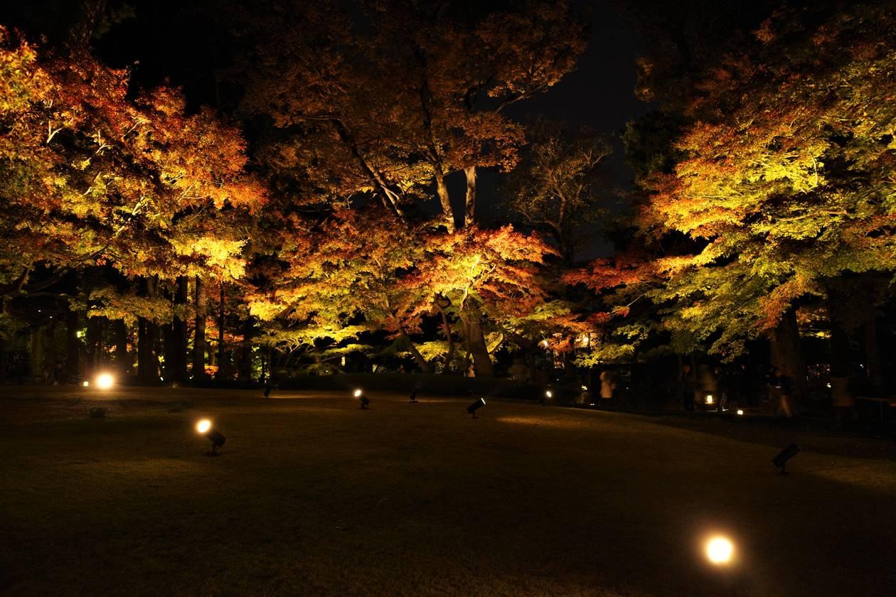 大田黒公園・芝生広場 紅葉ライトアップ