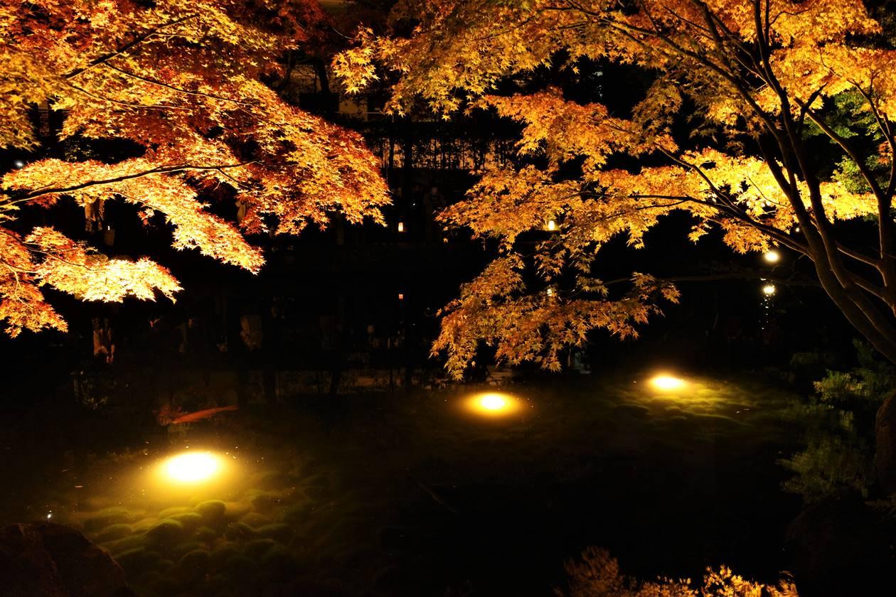 大田黒公園 池の紅葉ライトアップ