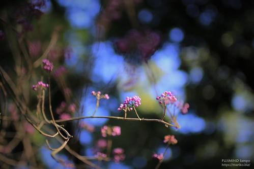 多福寺 20191130-IMG_6793 (2)