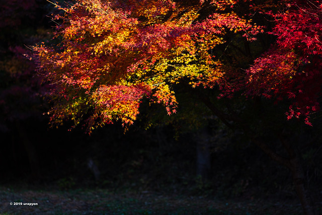 秋の思い出