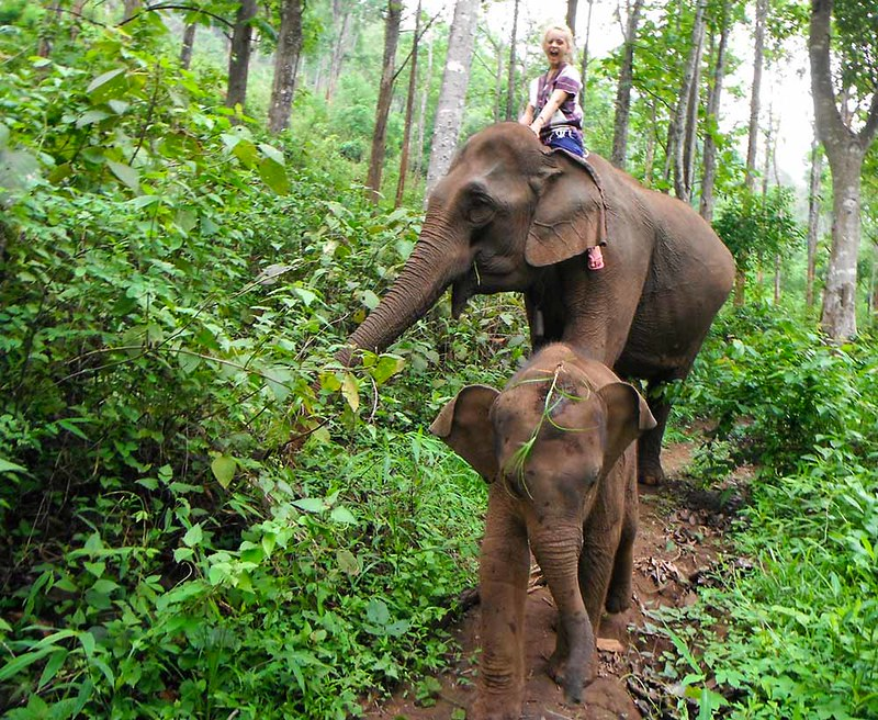 Chiang Mai Local Tours (Thailand) – Brochures, Tour Info, Price & Travellers Reviews