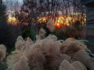 Thanksgiving Grasses at Sunset