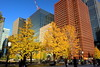 Autumn Leaves and Office Buildings by sumi!
