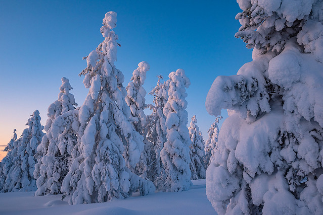 Forest in the polar night