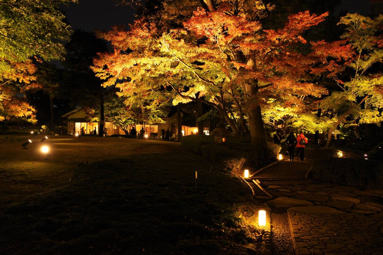 大田黒公園 紅葉ライトアップされる日本庭園