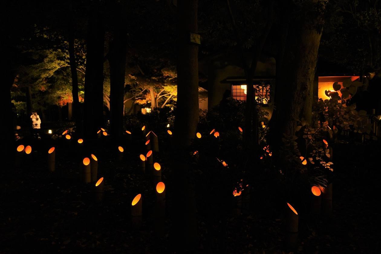 大田黒公園 竹林のライトアップ