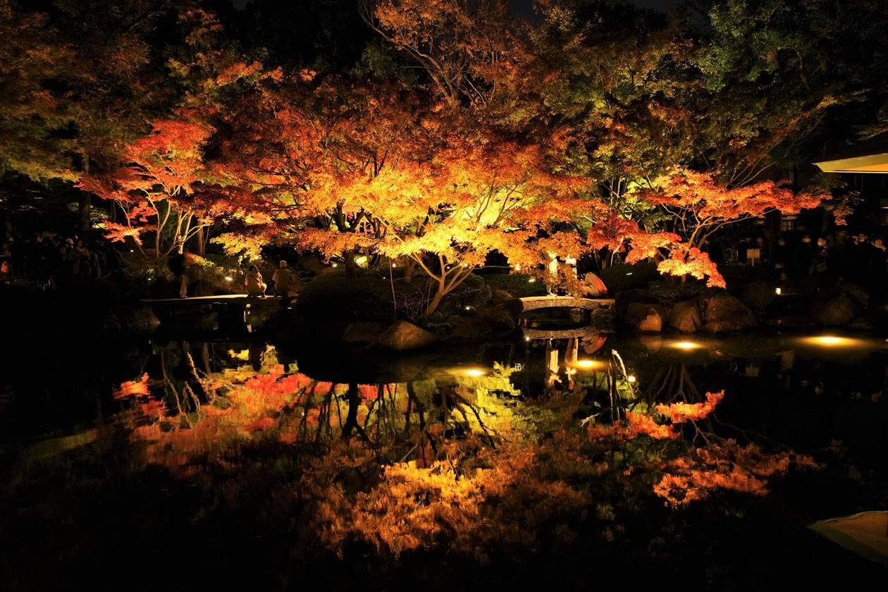 大田黒公園 紅葉ライトアップ 鏡の池