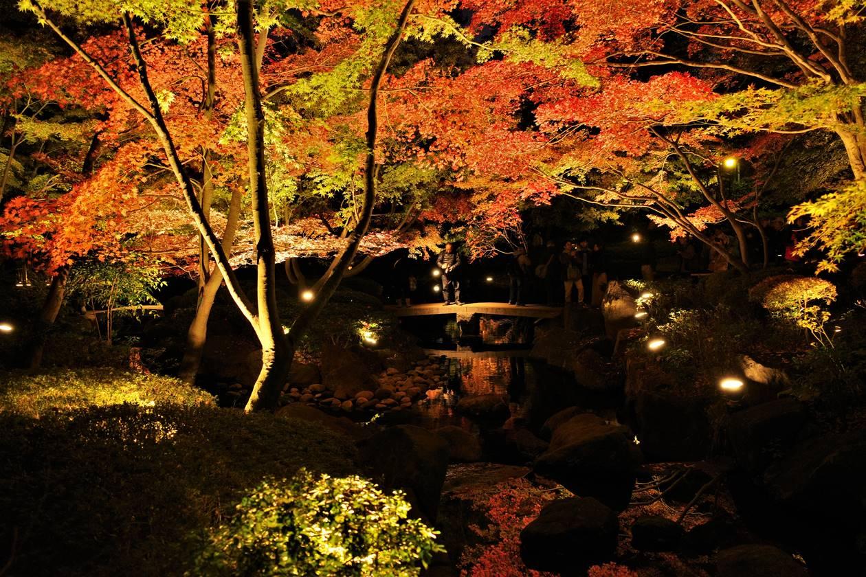 大田黒公園 紅葉ライトアップ 水面に映る紅葉