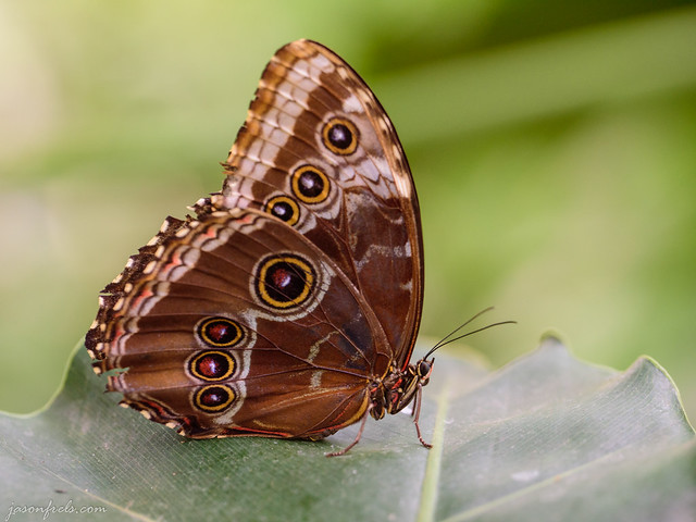 A butterfly at the Houston Museum of Natural Science