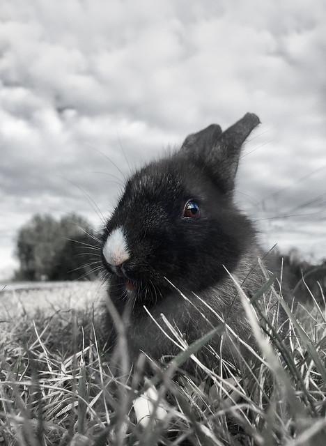 Nato dall'erba